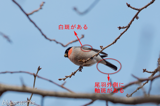 20130322-134726-1190aka - コピー.jpg